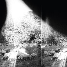 Godspeed You! Black Emperor - Asunder, sweet and other distress lyrics