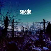Suede Life is golden lyrics